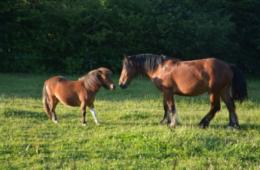 sejour equitation mjc ile aux tresors valbonne